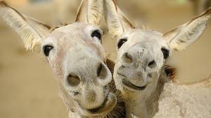 1411496509-3-ways-build-happy-staff-wants-win-donkeys